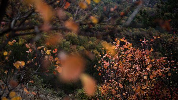 Φθινοπωρινό τοπίο στο Ζαγόρι - Sputnik Ελλάδα