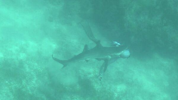 Επίθεση καρχαρία - Sputnik Ελλάδα