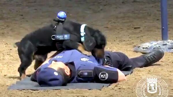 Ο σκύλος που κάνει τεχνητή αναπνοή - Sputnik Ελλάδα