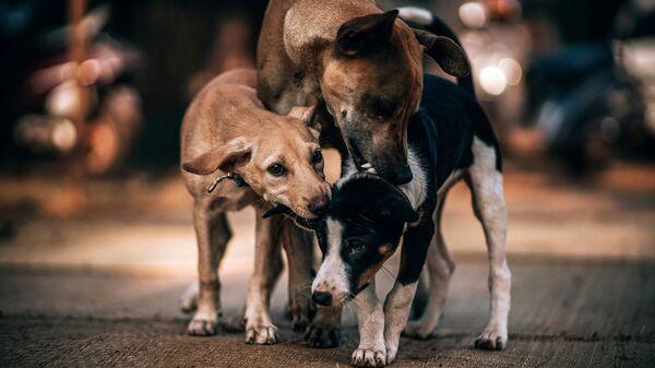 Αδέσποτα σκυλιά - Sputnik Ελλάδα