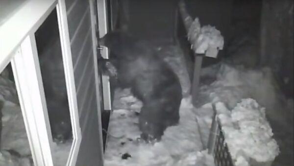 Αρκούδα ανοίγει την πόρτα σπιτιού - Sputnik Ελλάδα