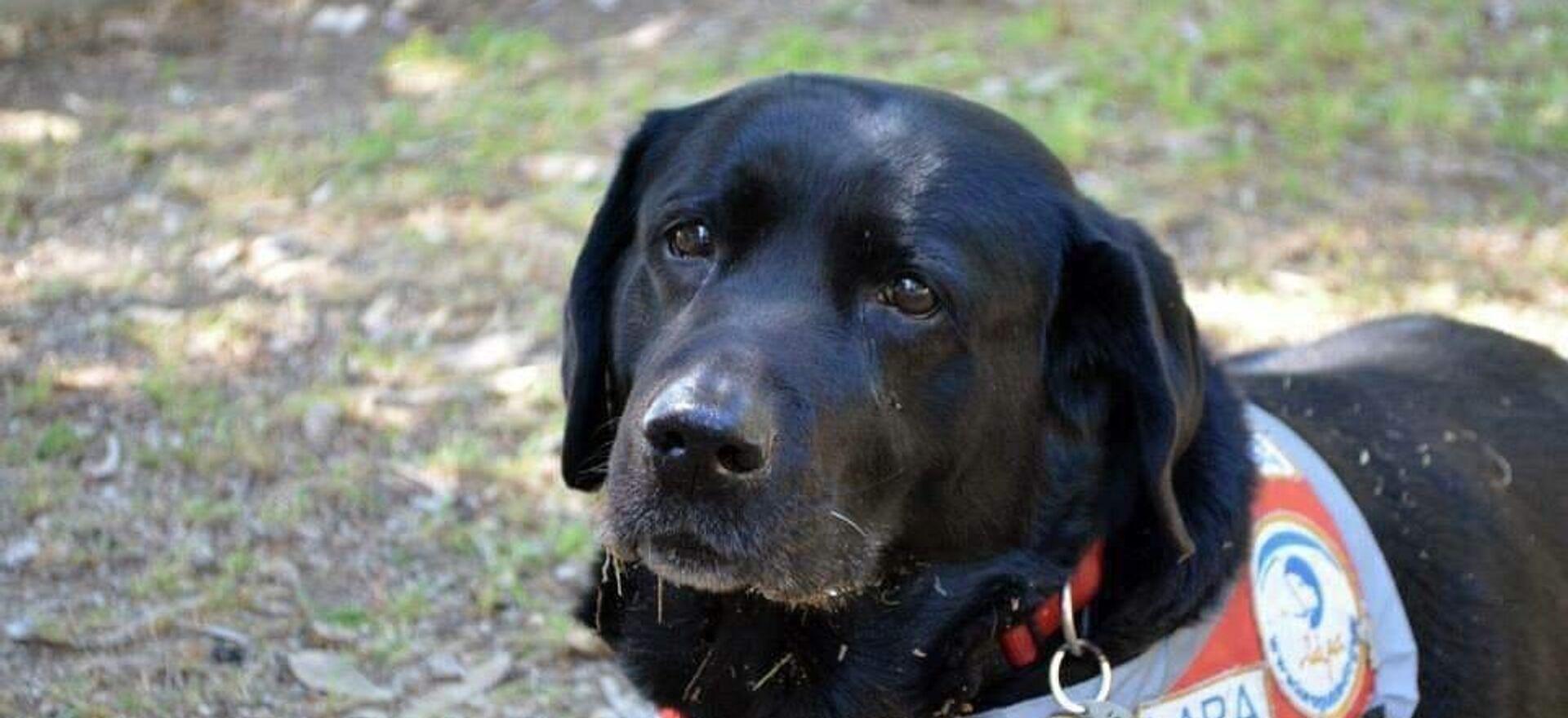 Πέθανε ο πρώτος σκύλος – οδηγός τυφλών στην Ελλάδα - Sputnik Ελλάδα, 1920, 27.03.2019