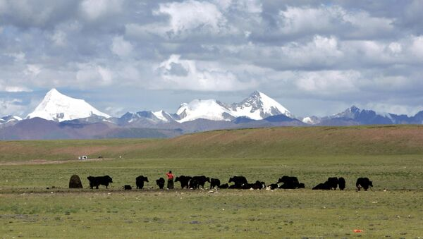 Tibetans graze their yak in the grasslands of the high Tibetan plateau in the county of Naqu, Tibet, China in this Thursday July 6, 2006 photo. - Sputnik Ελλάδα