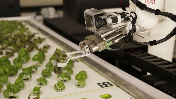 Ρομπότ καλλιεργούν λαχανικά στην Καλιφόρνια - Sputnik Ελλάδα