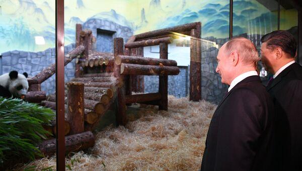 Πούτιν και ο Σι στον ζωολογικό κήπο της Μόσχας μετά από συνομιλίες, ενώ κοιτάζουν ένα πάντα - Sputnik Ελλάδα