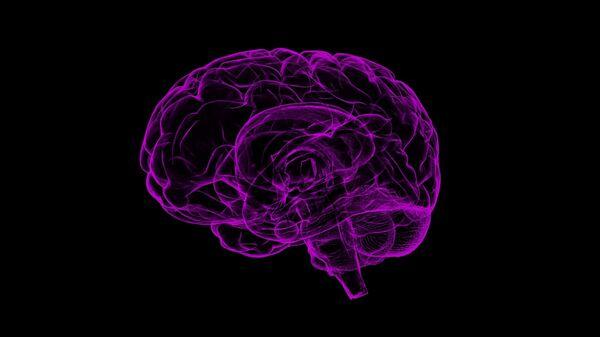 Ο εγκέφαλος - Sputnik Ελλάδα