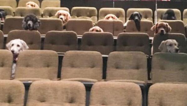 Σκυλάκια παρακολουθούν θεατρική παράσταση στον Καναδά - Sputnik Ελλάδα