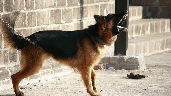 Λυκόσκυλο - Sputnik Ελλάδα