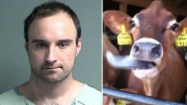Κτηνοβάτης ζητούσε από αγρότες να κάνει σεξ με τα ζώα τους - Sputnik Ελλάδα