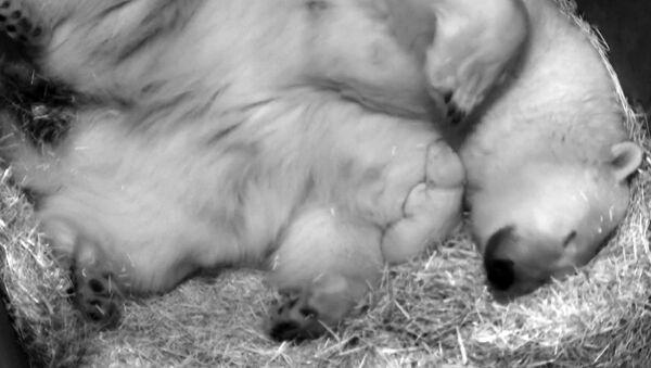 Το μοναδικό πολικό αρκουδάκι στον ζωολογικό κήπο της Βιέννης έγινε ενός μηνών - Sputnik Ελλάδα