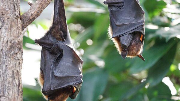 Νυχτερίδες - Sputnik Ελλάδα
