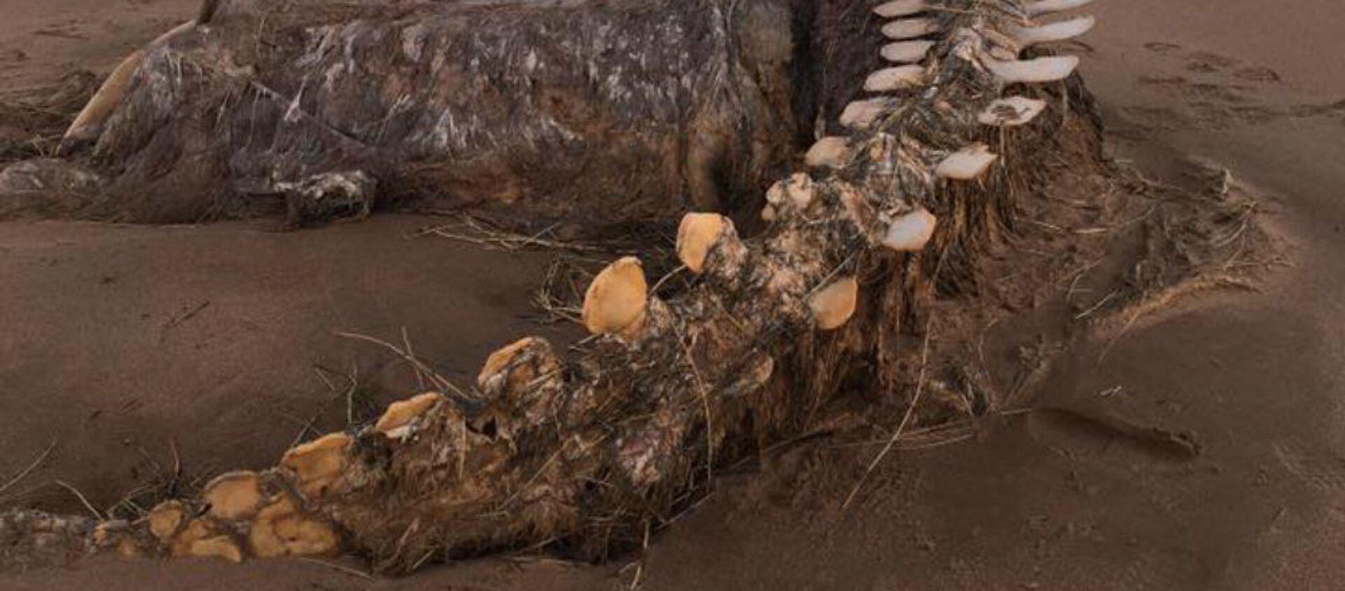 Τεράστιο κουφάρι ξεβράστηκε σε παραλία στην Σκωτία - Sputnik Ελλάδα, 1920, 12.02.2020
