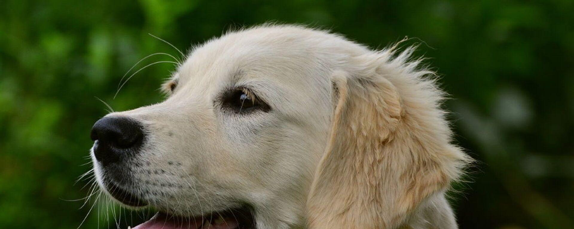 Σκυλί - Sputnik Ελλάδα, 1920, 25.08.2021