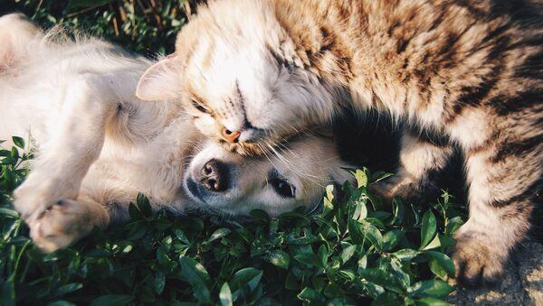 Ένας σκύλος και μια γάτα παίζουν - Sputnik Ελλάδα