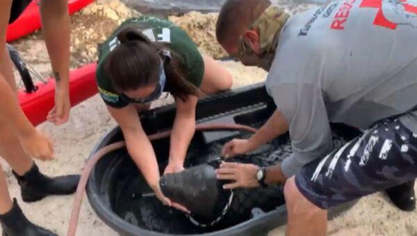 Εθελοντές έσωσαν έναν μικρό μανάτο που είχε παγιδευτεί σε ακτή της Φλόριντα - Sputnik Ελλάδα