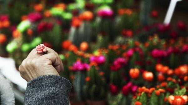 Λουλούδια - Sputnik Ελλάδα