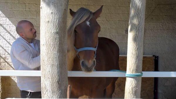 Αγρότης έσωσε άλογο από τη σφαγή και καλλιεργεί βιολογικά ζυμαρικά  - Sputnik Ελλάδα
