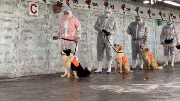 Στην Τεχεράνη εκπαιδεύουν σκύλους που θα εντοπίζουν όσους έχουν μολυνθεί από κορονοϊό - Sputnik Ελλάδα