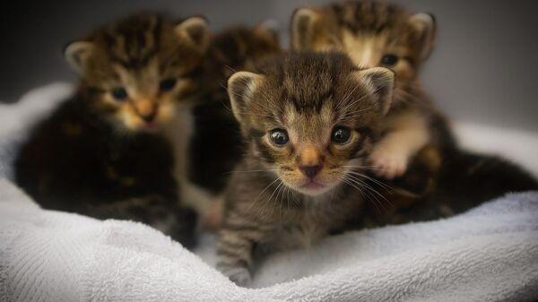 Τέσσερα γατάκια (φωτ. αρχείου) - Sputnik Ελλάδα