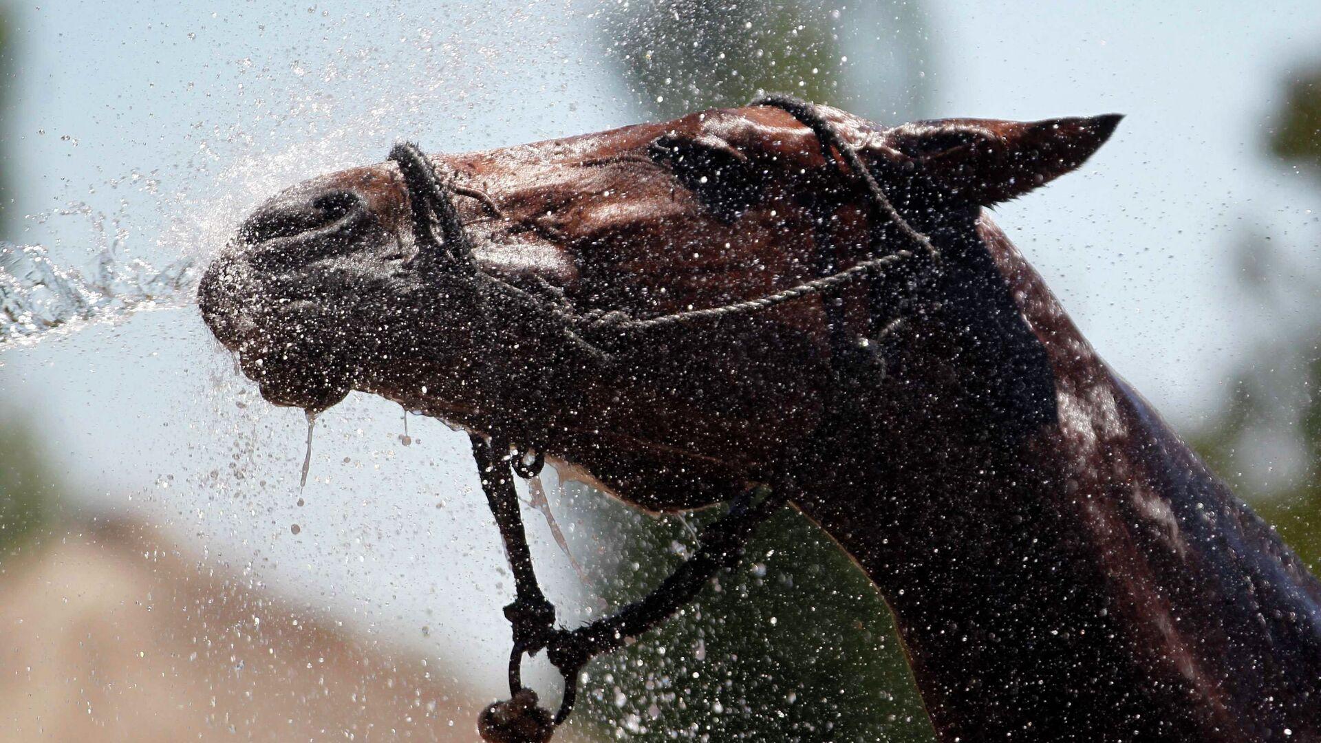 Ένα άλογο (φωτ. αρχείου) - Sputnik Ελλάδα, 1920, 16.09.2021