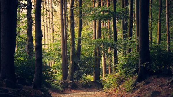 Δάσος - Sputnik Ελλάδα