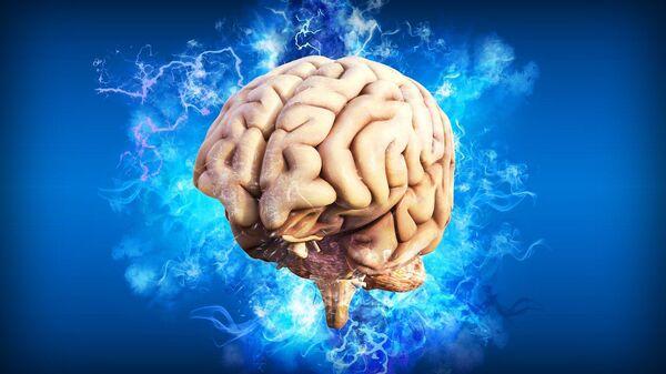 Ανθρώπινος εγκέφαλος (καλλιτεχνική αναπαράσταση) - Sputnik Ελλάδα