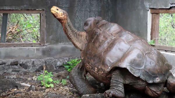 Ο Ντιέγκο, η γιγάντια χελώνα που έσωσε το είδος της επιστρέφει στο νησί όπου γεννήθηκε - Sputnik Ελλάδα
