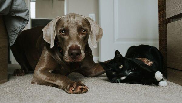 Σκύλος και γάτα - Sputnik Ελλάδα